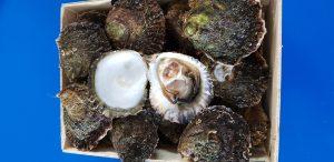 Huîtres plates de Camargue